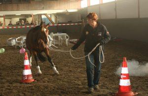 Paard een ruiter werken aan wederzijds respect en vertrouwen