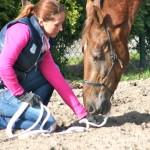 Tijdens een consult krijg je waardevolle informatie over het paard en het gedrag
