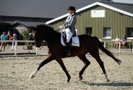 Een traject werkt toe naar ruiter en paard samen in balans