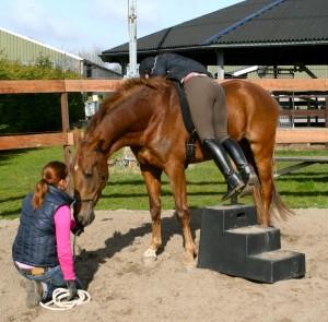 onder begeleiding zelf uw paard zadelmak maken