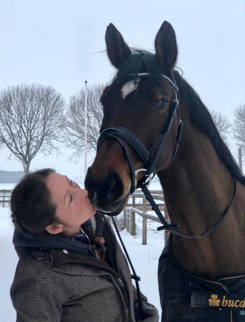 Lease paard Wendel zelfs op Grand Prix niveau