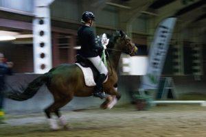 Expertise problemen & oplossingen: paarden zijn vluchtdieren, hoe leer je hen tegen hun natuur in te gaan?