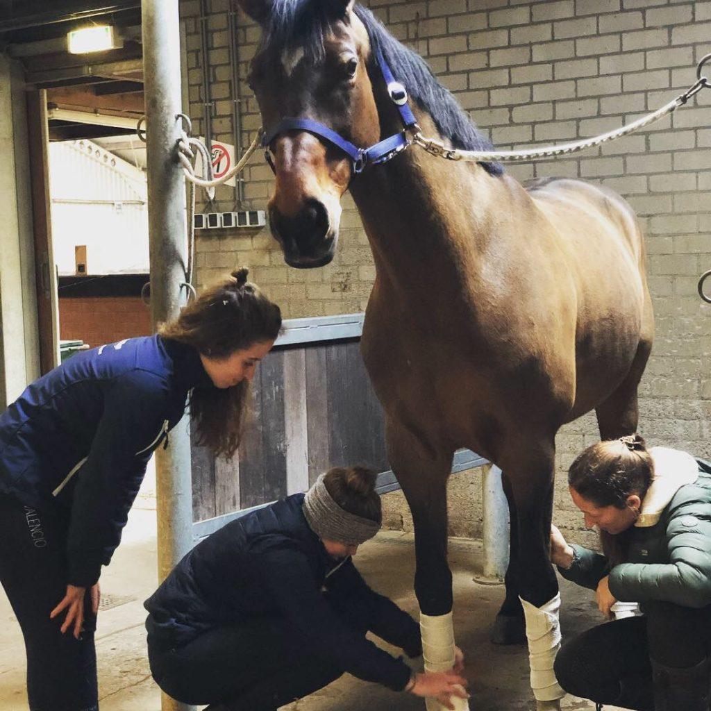 Stagiair Lisa en Fleur leren bandageren van Nicky