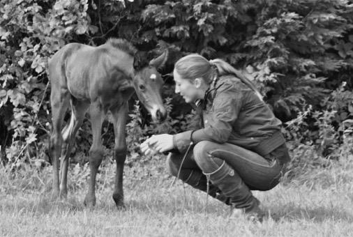 Vertrouwen opbouwen tussen veulen en de mens behoort ook tot de leefomstandigheden