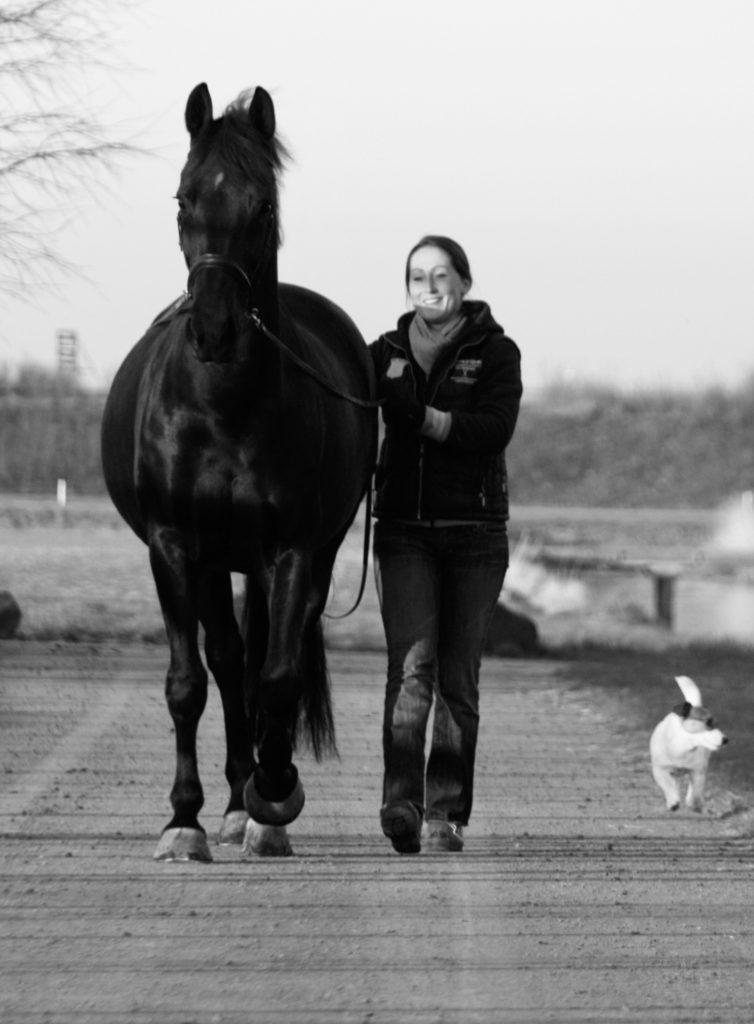 De gezondheid van het paard hangt voor een groot gedeelte af van de kennis van de ruiter