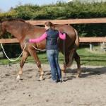 Het beleren van een jong paard met hier de oefening cirkel aan een enkele lijn