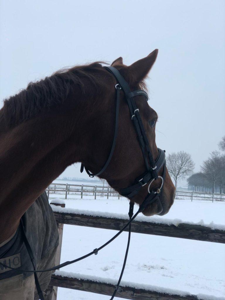 Jahzara, het paard dat Margot least